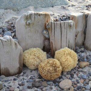 Cocoon Badesvampe fra Middelhavet